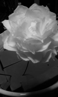 fiore1